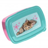 Box lunch kitten Hello 18 CM