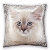 Coussin Chat 40 CM
